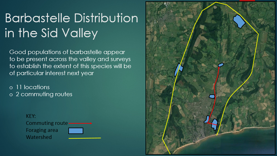 Barbastelle Distribution